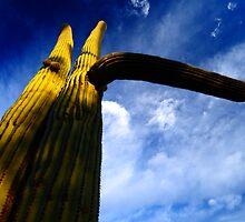 Desert Cactus  by Conor Quinlan