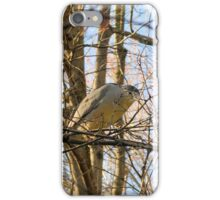 Resting Heron iPhone Case/Skin