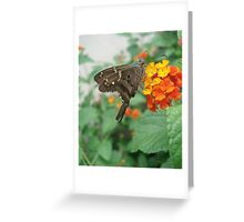 Long-tailed Blue Skipper in Red Lantana Greeting Card