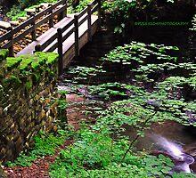 Fillmore Glen State Park VIII by PJS15204