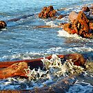 Massive DRift Wood by Digby