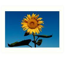 Sun Worshiper Art Print