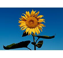Sun Worshiper Photographic Print
