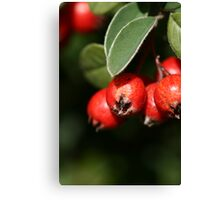 Berries of RED Canvas Print