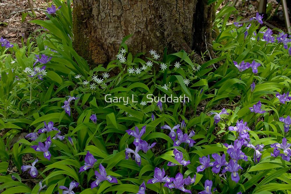 Woodland Bouquet   by Gary L   Suddath