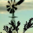 Australian Icon, Geelong District by Joe Mortelliti