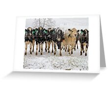 snow covered cows Greeting Card