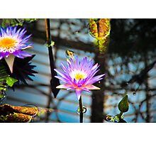 Hot Hot Lily Photographic Print