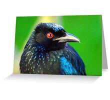 """""""And you call me a Drongo!"""" Greeting Card"""