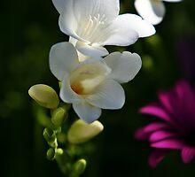 Lily by jongsoolee