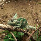Lizard by Celeste Thinks