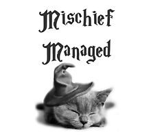 Kitten - Mischief Managed by OddFiction