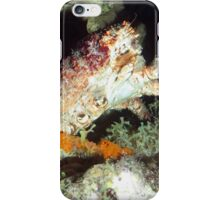 Caribbean Hairy Clinging Crab iPhone Case/Skin