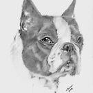 Boston Terrier by JeffBowan