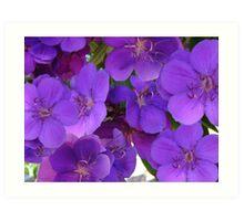 Beautiful Blooms Art Print