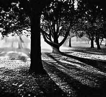 Misty Morning, Lake Jualbup #3 by Mark Boyle