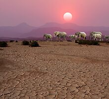DAMARALAND SUNSET - NAMIBIA by Michael Sheridan