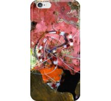 Banded Coral Shrimp on Colorful Coral iPhone Case/Skin