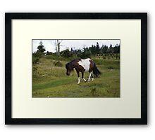 Grayson Highlands Pony Framed Print