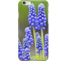 Grape hyacinth - lovely spring greetings iPhone Case/Skin