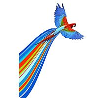 Awesome Parrot Photographic Print