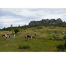 Grayson Highlands Ponies Photographic Print