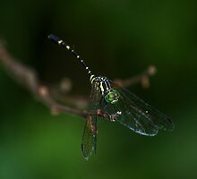 Neon Green Eye Liner (Dragonfly) by JLOPhotography
