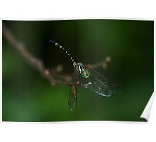 Neon Green Eye Liner (Dragonfly) Poster