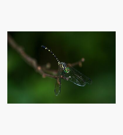 Neon Green Eye Liner (Dragonfly) Photographic Print