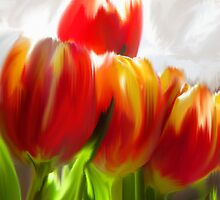Red Tulips by Charmain Schuh