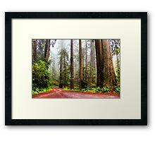 Giant Redwoods in the Mist, California, USA Framed Print
