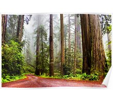 Giant Redwoods in the Mist, California, USA Poster