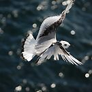 Airborne by shakey