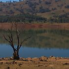 Lone tree by ndarby1