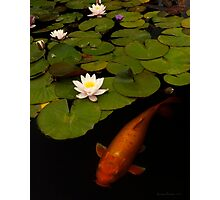 Capistrano Koi #208 Photographic Print