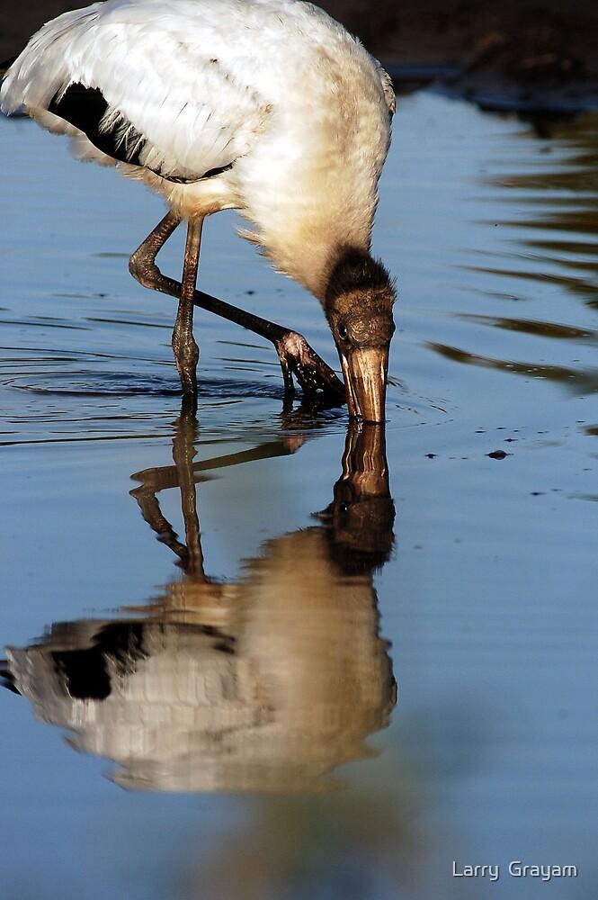 Wood stork reflection by Larry  Grayam