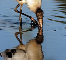 Wood stork reflection by Larry  Grayam