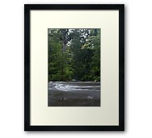 The Kauri Coast. Framed Print