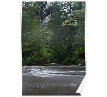 The Kauri Coast. Poster