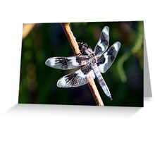 Eight-Spotted Skimmer on Shrub Stem Greeting Card