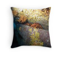 sea views from lounge room! Throw Pillow