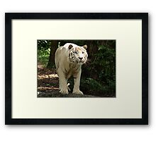 "White Tiger ""Omar"" Framed Print"