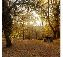 Autumn Rays Photographic Print