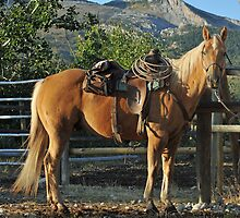 Palomino in the Sunshine by Donna Ridgway