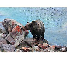 Bear crossing Photographic Print