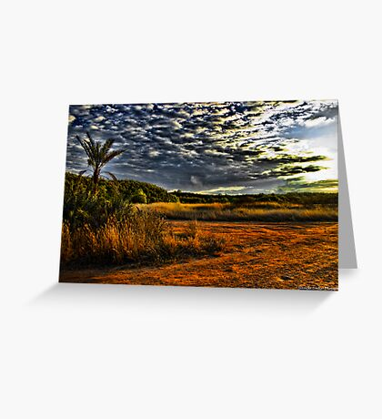Newport Conservation Park - Swamp Greeting Card