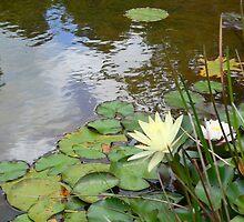 Knysna pond by Riaan Hefer