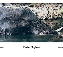 Chobe Elephant Series by Paul Lindenberg