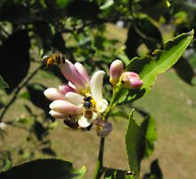 More Bees  by 4spotmore