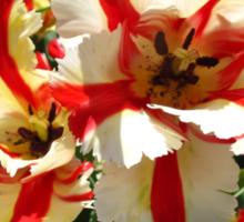 Big Top Tulips Sticker